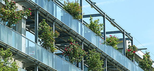 an urban application of container-grown roses